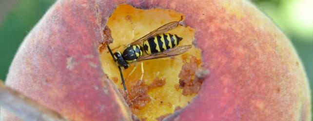 蜂に刺される夢を見たときの6つの意味