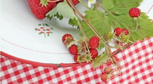 ワイルドストロベリーの花言葉の意味と育てるときの5つのポイント