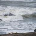 荒れた海のイメージ