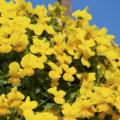 オンシジュームの花言葉の意味を理解して楽しく過ごす5つの方法