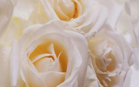 白いバラの花言葉の意味とは?5つの注意点