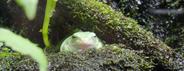 夢診断 カエルの夢の5つの意味とは