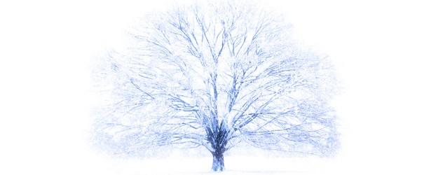 雪の夢を見たときの7つの意味とは?
