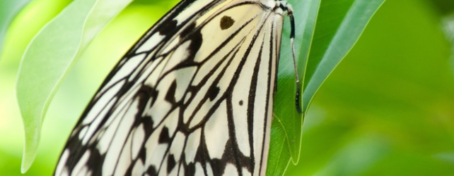 【夢占い】蝶が夢の中に出て来たときの5つの意味