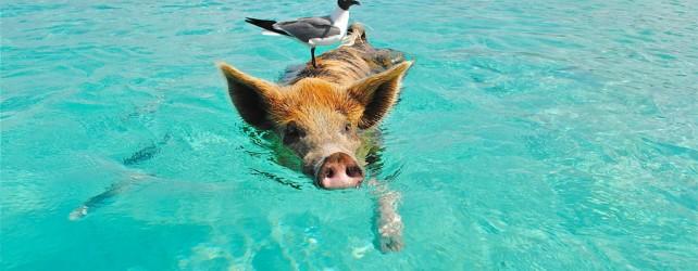 【夢占い】泳ぐ夢を見たときの5つの意味とは