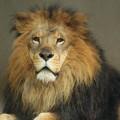 ライオンの夢を見たときの5つの意味 (1)