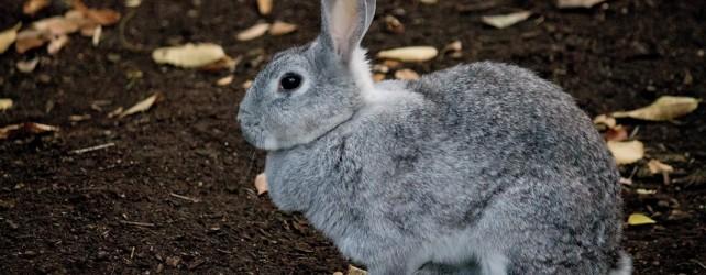 【夢占い】ウサギの夢を見たときの5つの意味