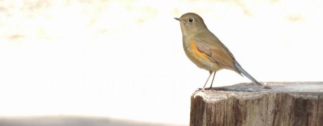 小鳥の写真