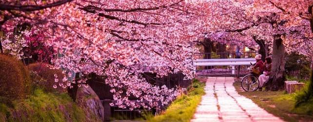 【夢占い】桜の夢を見たときの6つの意味とは
