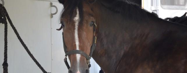【夢占い】馬の夢を見たときの5つの意味