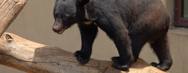 【夢占い】熊の夢を見たときの5つの意味