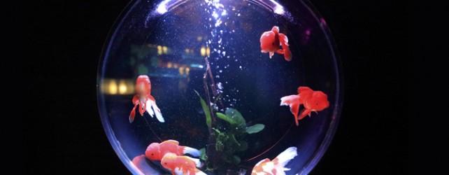 【夢占い】金魚が夢に出て来たときの5つの意味とは