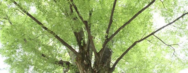 【夢占い】木の夢を見たときの11の意味