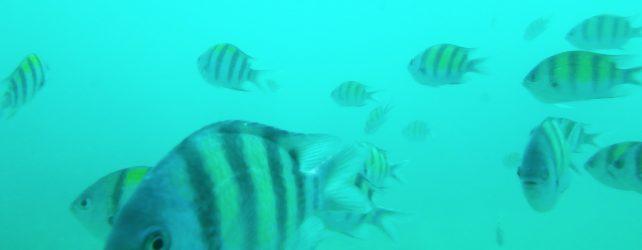 魚の夢を見た時の5つの意味