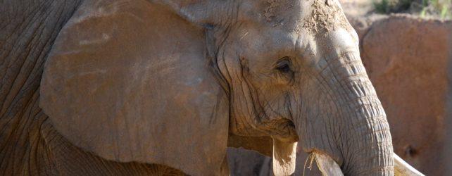 象の夢を見た時の5つの意味