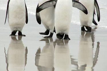 「夢占い」ペンギンの夢を見た時の5つの意味