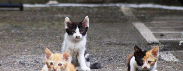【夢占い】子猫の夢を見たときの10の意味