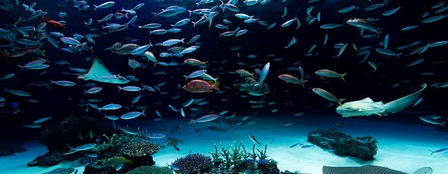 [夢占い]水族館の夢を見たときの6つの意味