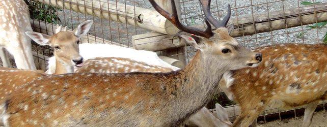 【夢占い】鹿の夢を見たときの11の意味