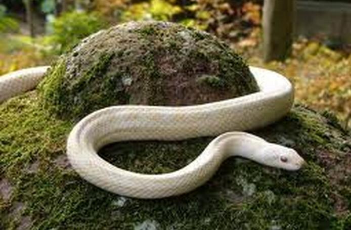 蛇の夢の意味とは?蛇の夢を見たときに考えたい4つのポイント