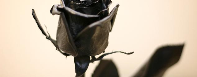 黒薔薇の気を付けたい花言葉の意味と役立つ知識6選