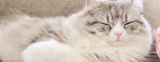 夢に猫が出て来たときの5つの意味