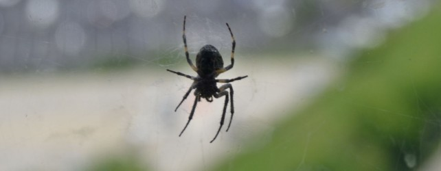 蜘蛛の夢を見たときの6つの意味