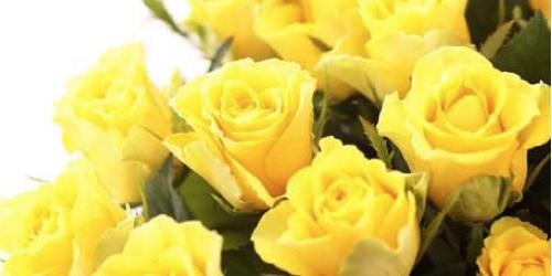 黄色いバラの花言葉の意味とは?5つの注意点