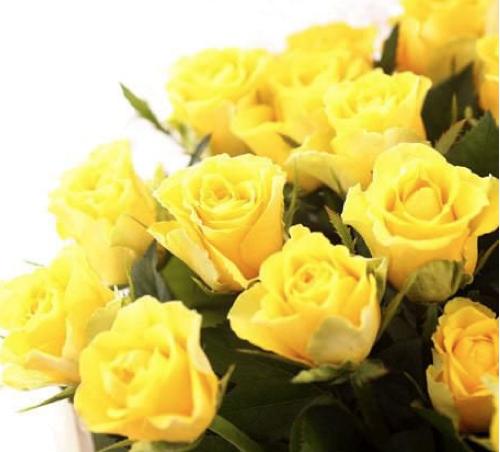 黄色いバラの花言葉の意味とは 5つの注意点 花言葉と夢占い