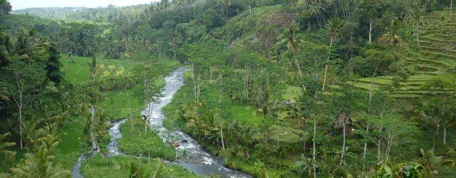 [夢占い]ジャングルの夢を見たときの14の意味
